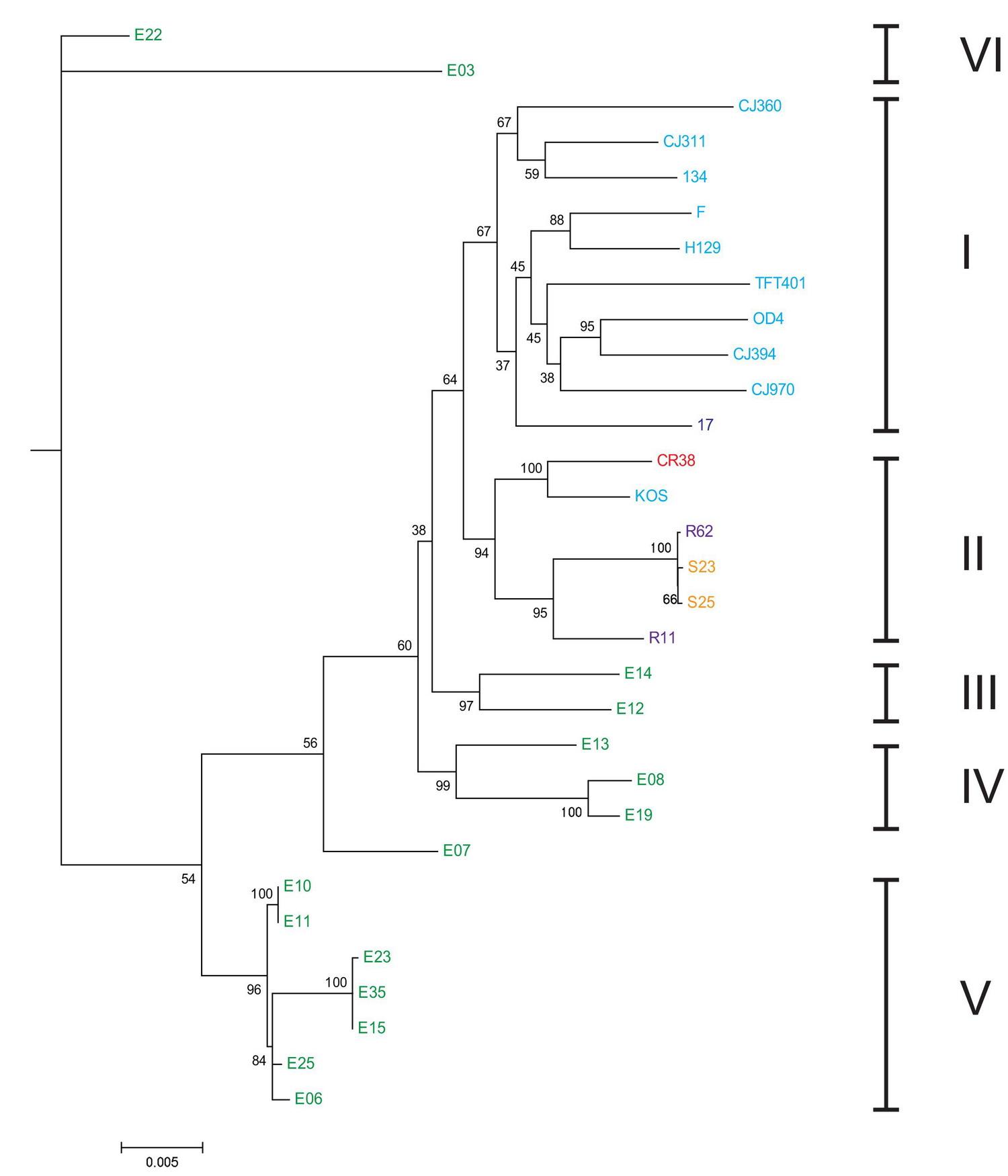 hsv-tree.jpg