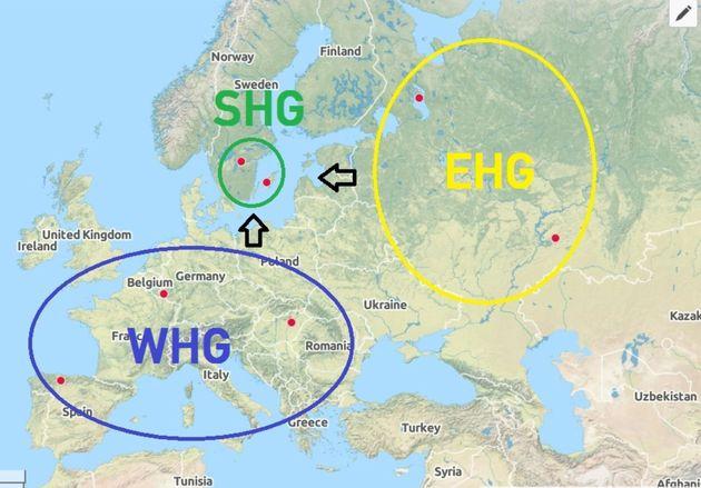 WHG-SHG-EHG-1.jpg