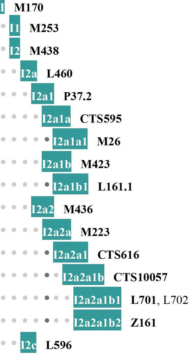 haplo-I-tree17.jpg